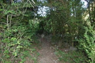 sentier dans les buis au hameau de Berlières