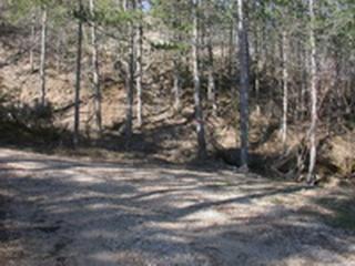 Chemin des Pennes dans la forêt de pins