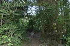 sentier dans les buis au hameau de Berlière