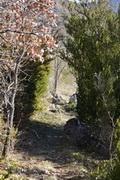 haies de buis au dessus du cimetière