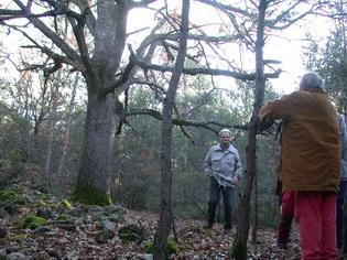 montée dans le bois