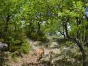 dans le bois de chênes