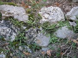 restes de mur